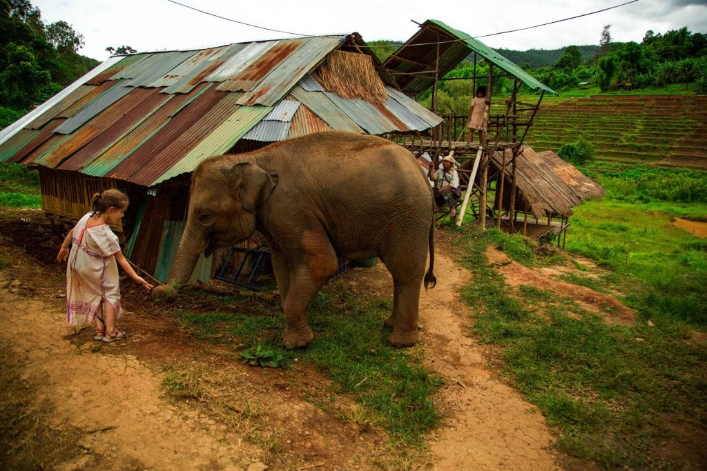 Elephants a top thing to do in Chiang Mai Thailand