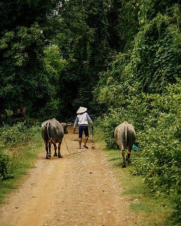 Don Det, Laos – A Complete Guide
