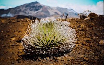 Haleakala Crater Hike & More