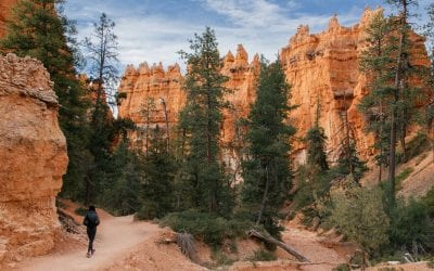 Bryce Canyon Hikes and Exploration in 1 Day
