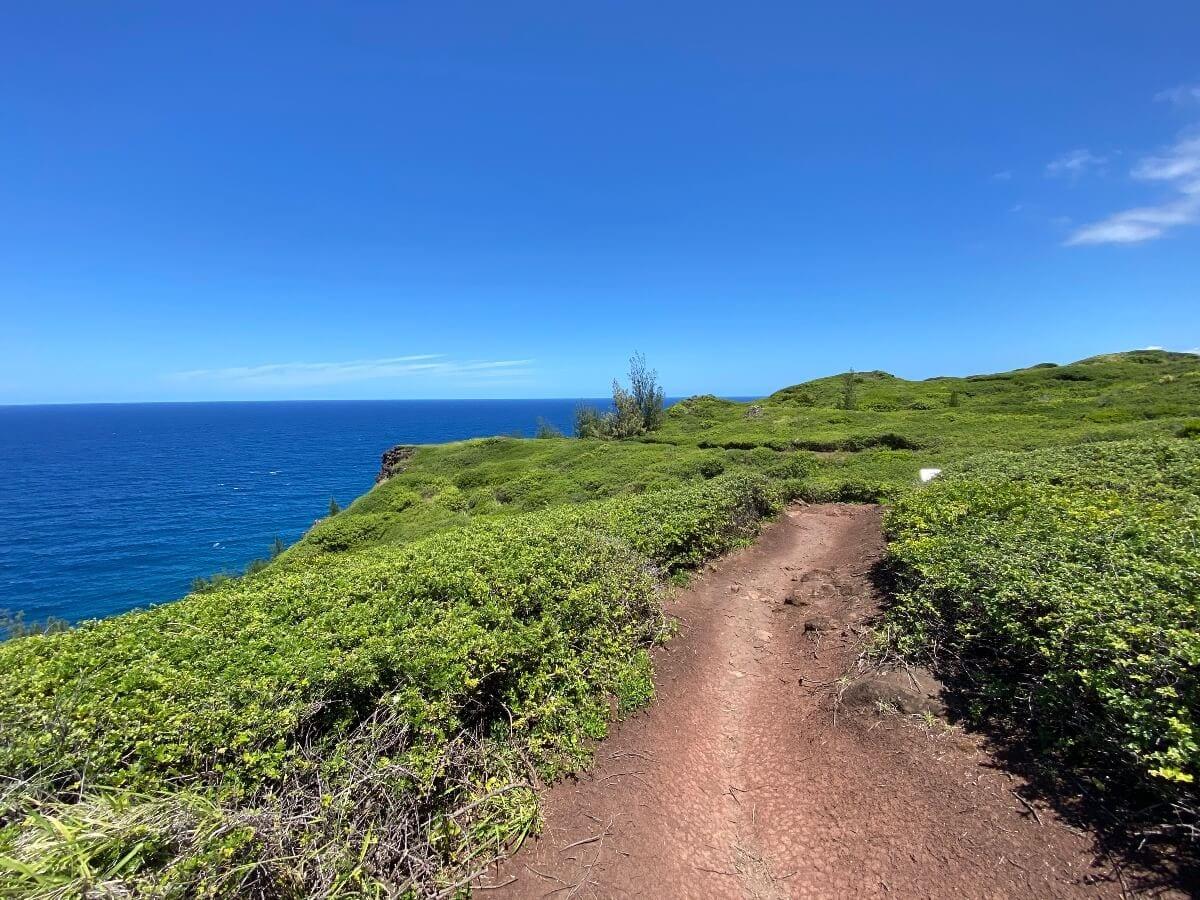 Ohai Trail an easy hiking trail on West Maui