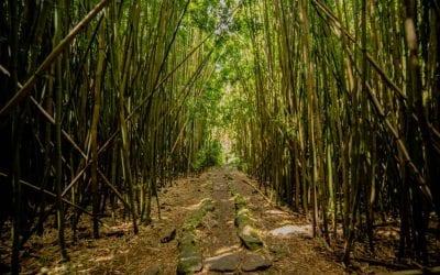 A Guide to Hiking the Pipiwai Trail, Maui, HI